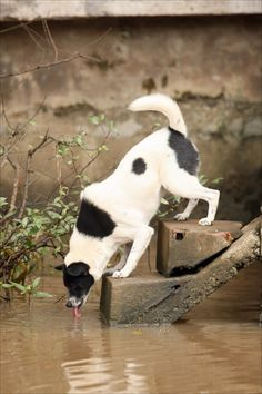 Important information on a disease transmittable from wild animals to pets via standing water. Please read & share!