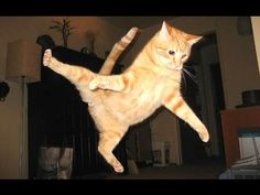 Funny Cats - A Funny Cat Videos Compilation 2015 - Check out Best Funny Videos…