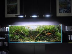 Tactful tested aquaponics pond look at more info Salt Water Fish, Salt And Water, Fresh Water, Nature Aquarium, Planted Aquarium, Aquarium Ideas, Freshwater Plants, Freshwater Aquarium, Aquascaping