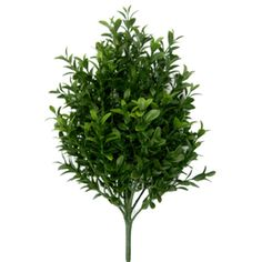 "12"" Boxwood Artificial Plant -Green (pack of 12) - PBB438-GR"
