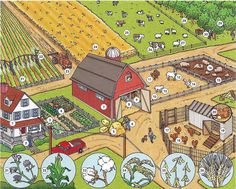 The farm, animals and farm houses English lesson available in PDF
