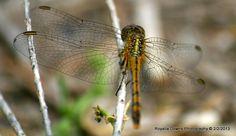dragonfly1 Photography, Photograph, Fotografie, Photoshoot, Fotografia