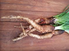 Luthi Salsify  We have been growing this old and much sought-after landrace for at least 20 years and consider it from a culinary standpoint to be the cream of the very best. Our original seed came from the internationally-known Swiss grass roots plant and breed organiz