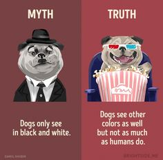 Learn the Truth About Common Animal Myths From These Informative Illustrations - World's largest collection of cat memes and other animals Wow Facts, True Facts, Weird Facts, Film Anime, Interesting Facts About World, Unbelievable Facts, Amazing Facts, Psychology Facts, Funny