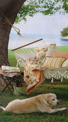 a beautiful afternoon in a beautiful hammock
