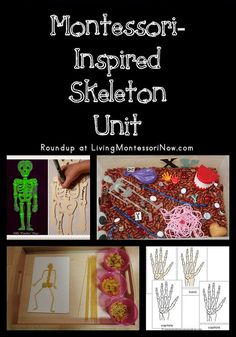Roundup with a variety of Montessori-inspired skeleton activities that can be used to create a multi-level skeleton unit for preschoolers on up. Montessori Science, Montessori Classroom, Teaching Science, Maria Montessori, Human Body Lesson, Human Body Unit, Study Biology, Biology Lessons, Carl Sagan
