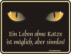 Blech-Schild Spruch Ein Leben ohne Katze: Amazon.de: Küche & Haushalt