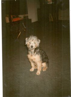 Kajka as a young puppy