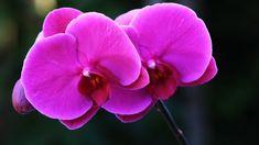 Z čeho lze také vytvořit hnojivou zálivku na orchideje