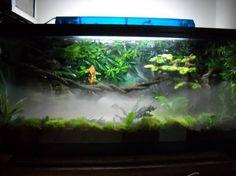 Crested Gecko and his awesome setup!!!! - Vivarium Forums