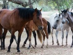 Az Republic Opinion Page, Aug. 10, 2015 - Remove Those Who Do Most Damage: Feral Humans - Beautiful Tonto Forest lands have been trashed and made scary by people, not wild horses.