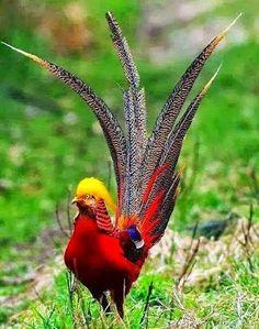 oiseau enchanteur