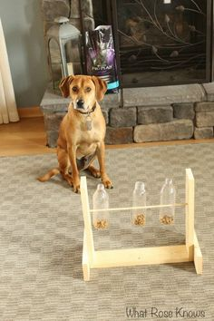 dog is a and loves his Purina Pro Plan!My dog is a and loves his Purina Pro Plan! Homemade Dog Toys, Diy Dog Toys, Pet Toys, Positive Dog Training, Training Your Dog, Training Tips, Dog Treat Toys, Food Dog, Dog Enrichment