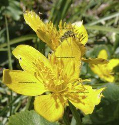 naturfoto online Plants, Flora, Plant