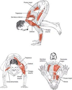 Esta postura del cráneo es un equilibrio sobre los brazos. Las posturas de equilibrio desarrollan la ligereza, fuerza y agilidad. Se adquiere un enorme control sobre el cuerpo. Se tonifican todos los músculos. Se incrementa la coordinación y concentración.