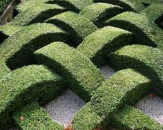 Cool! Woven Hedges!