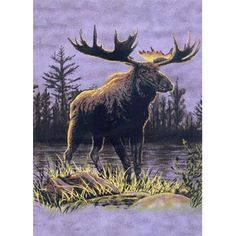 "G530 Moose Blanket. Buy it wholesale online at EclipseDist.com. Great decor for cabins, trailers, home and more. A luxurious blanket. Can be used at the game, on a picnic, in the bedroom, or cuddle under it in the den while watching TV. These detailed designs bring the outdoors adventure into your home yet keep you warm and cozy on those chilly domestic safaris. These blankets are extra warm, as soft as mink (also known as ""Korean mink"") and have superior durability. Machine wash and dry."