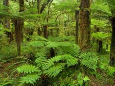 many of these images are part of our Free Wallpaper and Free ScreensaversVirgin Rainforest, Oparara Basin, Karamea, New Zealand imageBROKER / SuperStock