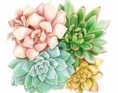 Reproduction d'aquarelle succulente - assortiment Blush