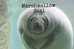 Manatee | 22 Slightly Wrong Names For Animals