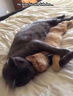 Soooo cute, cat and kitten hugging.