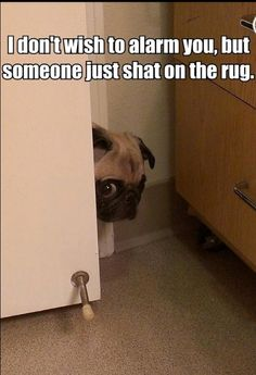Swoory it was me ( the pug)