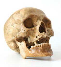 Stock image of 'Human skull on a white background'