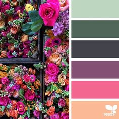 today's inspiration image for { flora brights } is by @fairynuffflower ... thank you, Steph, for another wonderful #SeedsColor image share!