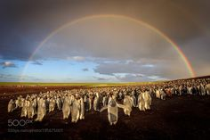 Over the Rainbow by ianplant #animals #animal #pet #pets #animales #animallovers #photooftheday #amazing #picoftheday