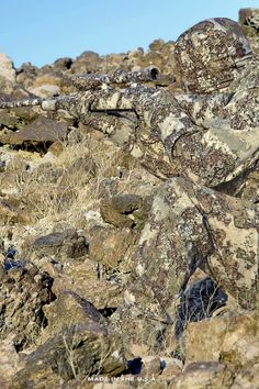 When camouflage is an art by itself 😍 Sniper Camouflage, Best Camouflage, Military Camouflage, Military Weapons, Military Life, Military Art, Ghillie Suit, Special Forces Gear, Military Special Forces