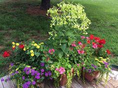 Bright color containers - nicotiana, geraniums, verbena, creeping jenny, salvia, lantana.