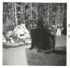 Vintage Snapshot Christmas Kitty Black Cat