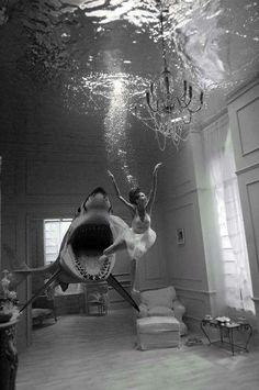 #shark