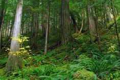 Suiattle River Trail — Washington Trails Association
