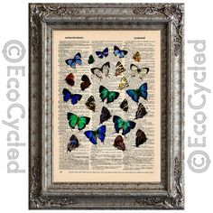 South American Butterflies 3 on Vintage Upcycled Dictionary Art Print Book Art Print Butterfly bookworm gift