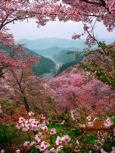 Spring landscape of Japan!