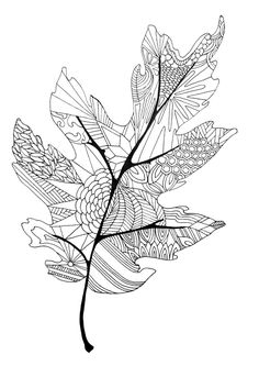 Fall leaf coloring page -Twineandtable