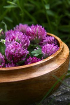 Wild About - Red Clover | Hunger and Thirst