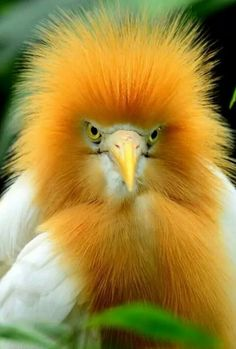 """Egret.... LOL reminds me of a Parent or Teacher when you are aren't being truthful....""""Really,you want to try again?"""""""