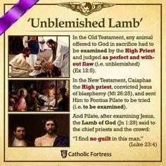 Unblemished Lamb Catholic Theology, Catholic Religion, Catholic Quotes, Catholic Prayers, Religious Quotes, Catholic Lent, Catholic Answers, True Faith, Prayer Quotes