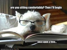 Westie reading a fairytale.
