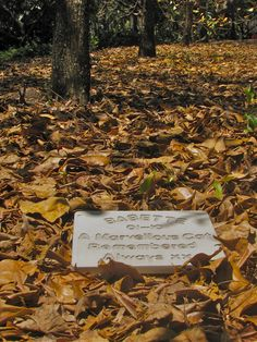 You don't have to do a great deal of work to create this kind of effect.  I think large Memorial Marker makes a lovely tribute just sitting in the fallen leaves from this grove of deciduous trees.