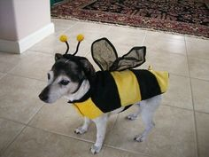Aw, mom, how long do I have to be a bee? |  #Dog #bee | Vote for the Best Pet Halloween Costume in Marin - San Anselmo-Fairfax, CA Patch