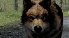 wolfblood-cbbc - great series, great wolf!