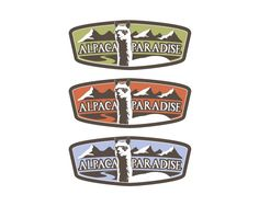 Alpacas In Paradise  by tracibande