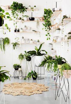 Déco blanche et plantes vertes - La boutique Ivy Muse