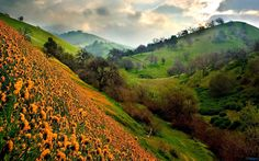 Valley of Flowers Again, India