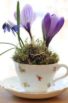 Crocus in a teacup --- springtime loveliness.