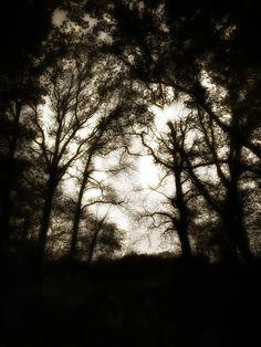 Au bois, Mouguerre