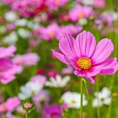 Die 60 Besten Bilder Von Garten Tipps Gardening Gardens Und
